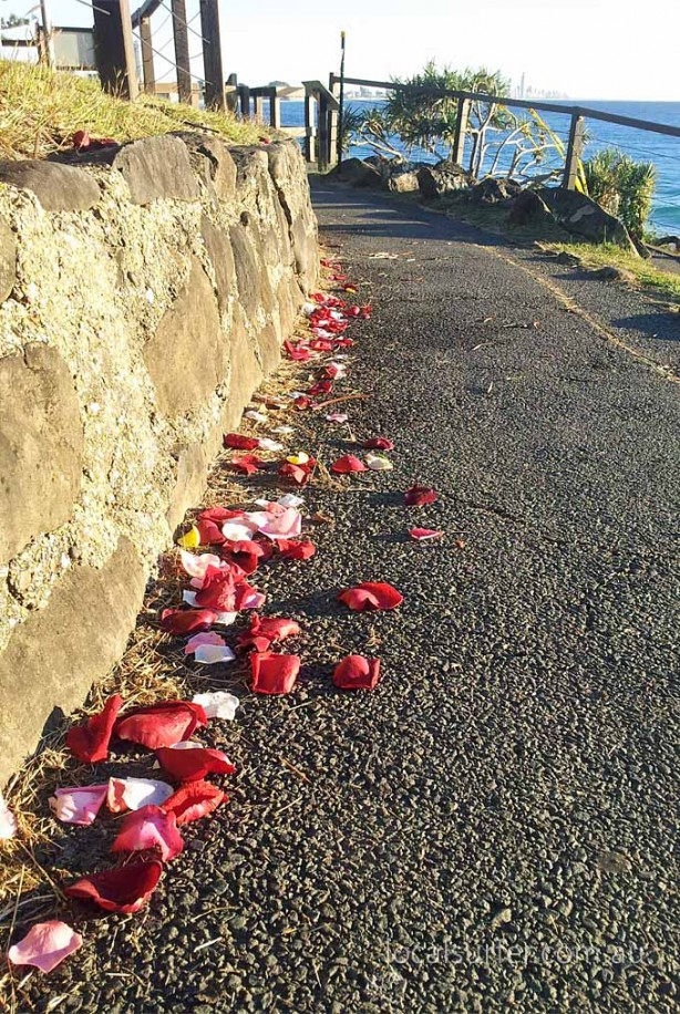 7:19 am - Petals, left overs from a ceremony brighten the walking track