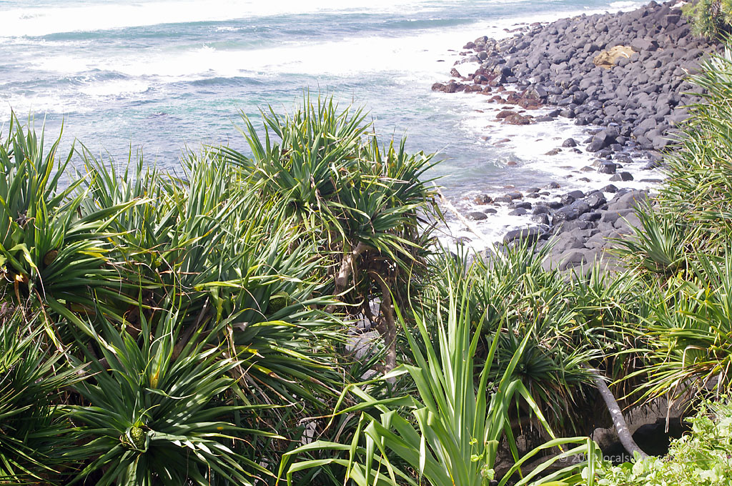 burleigh point lookout