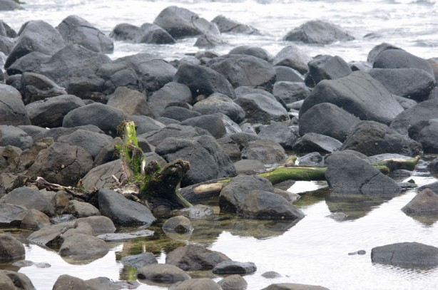 9:45 am - Burleigh. Mossy old log washed in.